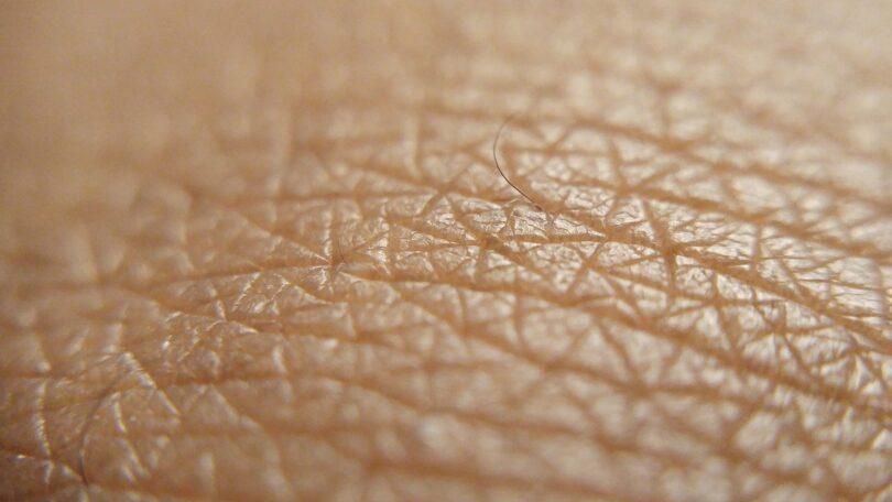 primer plano piel